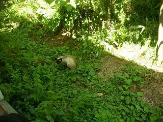 ワタクシ神奈川の毒フグでございます。_c0102228_1759431.jpg