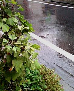 ☆雨と美味しい物とお仕事☆_c0092953_15114230.jpg