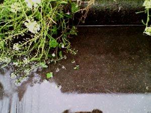 ☆雨と美味しい物とお仕事☆_c0092953_15115247.jpg