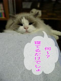 b0117783_16113736.jpg