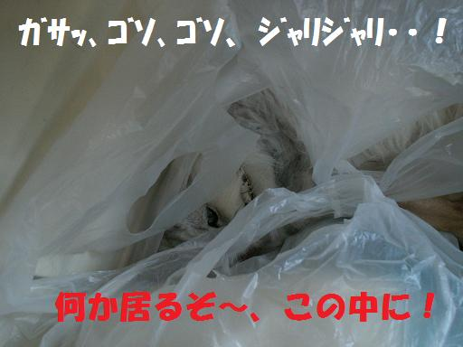 a0037298_2264851.jpg