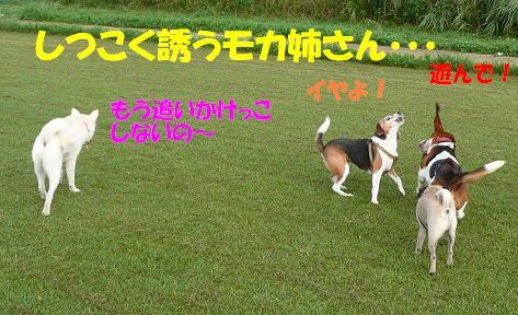 f0121712_10414955.jpg
