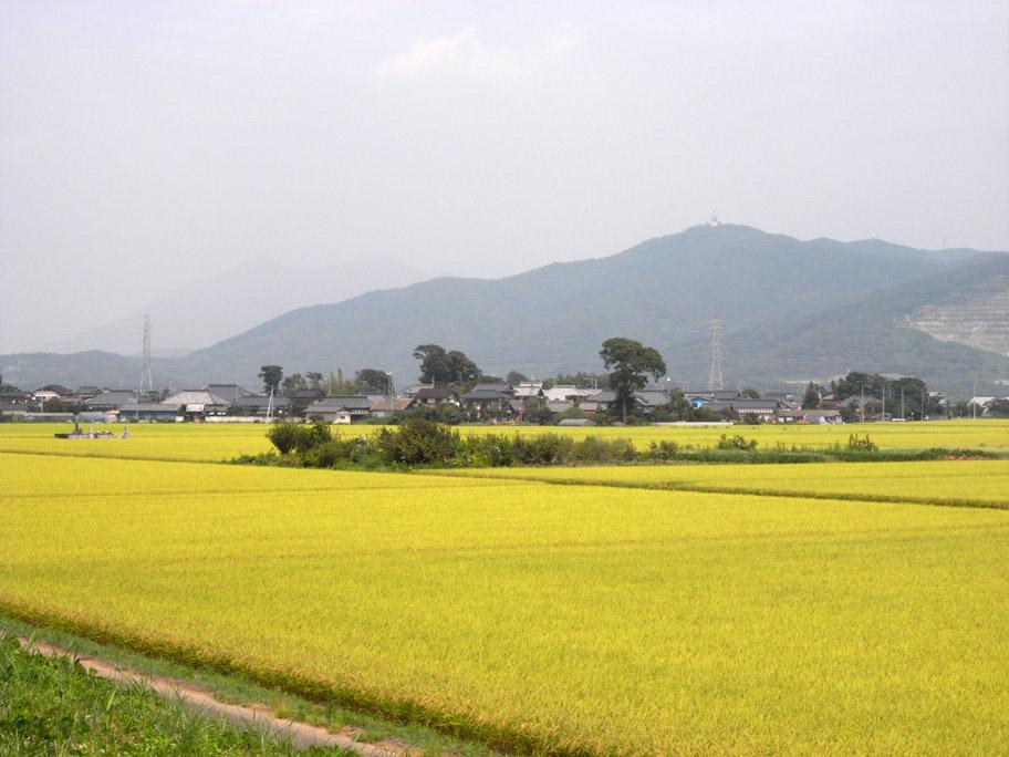 桜川 (桜橋下流)_b0023523_13282458.jpg
