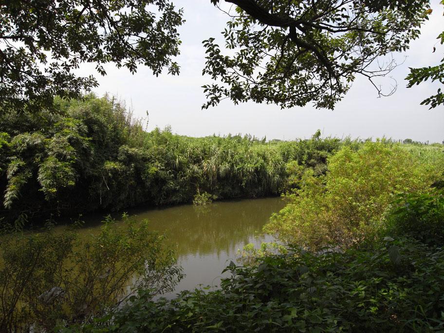 桜川 (桜橋下流)_b0023523_1328920.jpg
