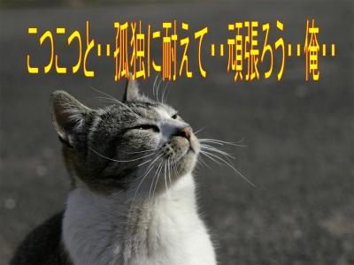 e0022736_1311127.jpg
