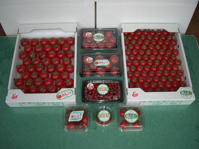 「トマト物語り Q&A-3」_c0126766_12271067.jpg