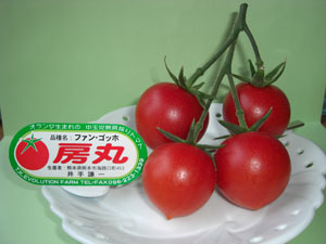 「トマト物語り Q&A-3」_c0126766_1451961.jpg
