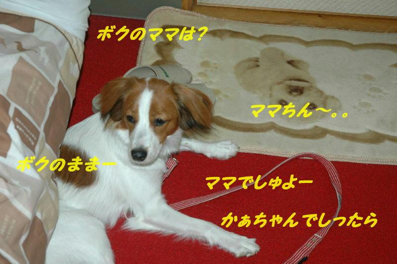 c0075585_04111.jpg
