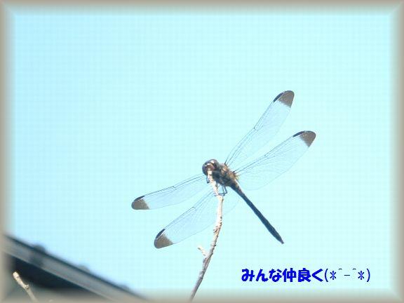 b0059087_1838857.jpg