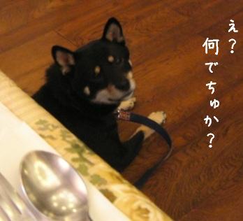 清里旅行・・・食事&遊び編_f0068501_10313227.jpg