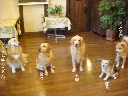 チャリンジャー(犬用車椅子)_f0064906_17567100.jpg