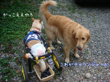 チャリンジャー(犬用車椅子)_f0064906_1812524.jpg