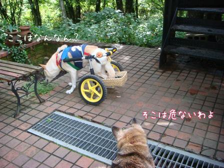 チャリンジャー(犬用車椅子)_f0064906_1813771.jpg