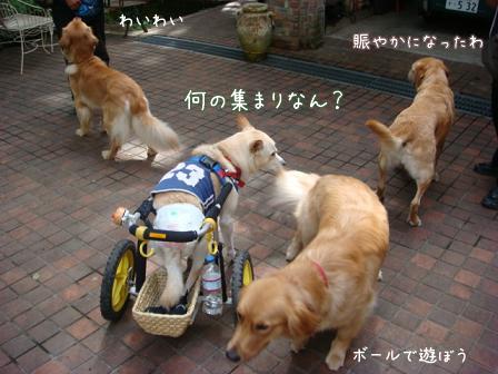 チャリンジャー(犬用車椅子)_f0064906_181419.jpg