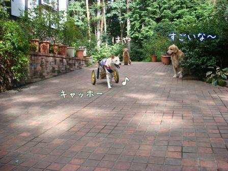 チャリンジャー(犬用車椅子)_f0064906_18142158.jpg