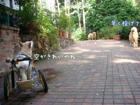 チャリンジャー(犬用車椅子)_f0064906_18163010.jpg