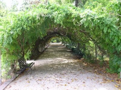 緑のトンネル_b0113510_122836.jpg