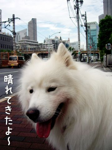 のんびりお散歩_c0062832_1851276.jpg