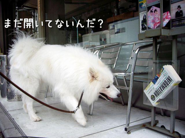 のんびりお散歩_c0062832_185139.jpg