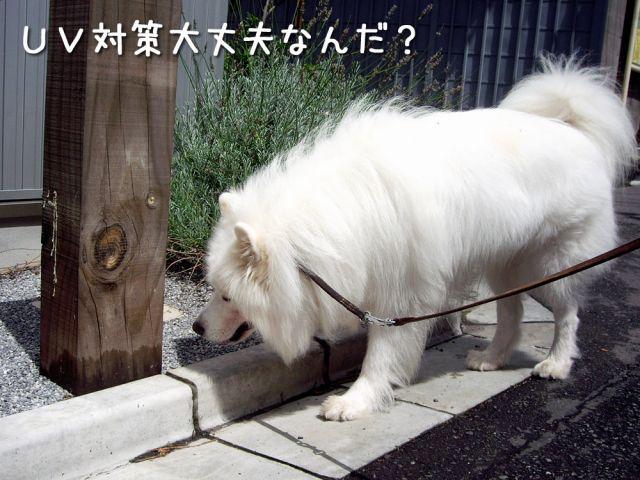 のんびりお散歩_c0062832_1853622.jpg