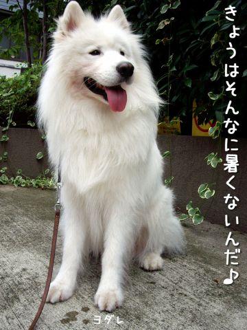 のんびりお散歩_c0062832_1855083.jpg