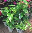 熱帯の植物_d0100638_189241.jpg