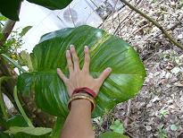 熱帯の植物_d0100638_1894927.jpg