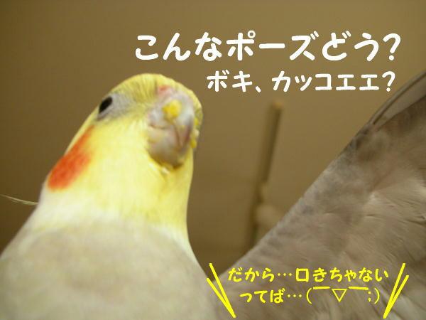 f0132055_1232388.jpg