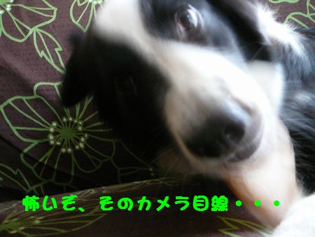 a0100564_2136495.jpg