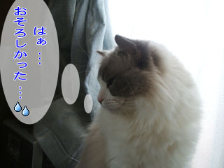 b0117783_105411.jpg