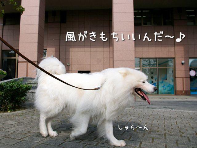 今朝はおじ散歩_c0062832_1646463.jpg