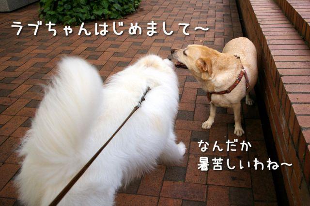 今朝はおじ散歩_c0062832_16472056.jpg