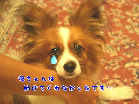 d0013149_0534167.jpg