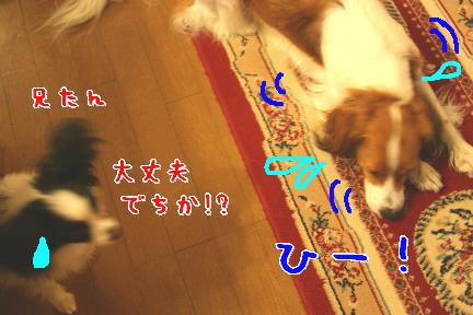 d0013149_119942.jpg