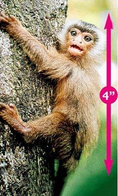 ★世界一小さな動物とは?さて、どの動物かな?(゚ロ゚;)エェッ!_a0028694_8515297.jpg