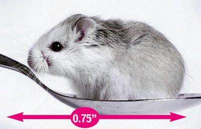 ★世界一小さな動物とは?さて、どの動物かな?(゚ロ゚;)エェッ!_a0028694_8594587.jpg