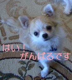 c0132205_1919427.jpg