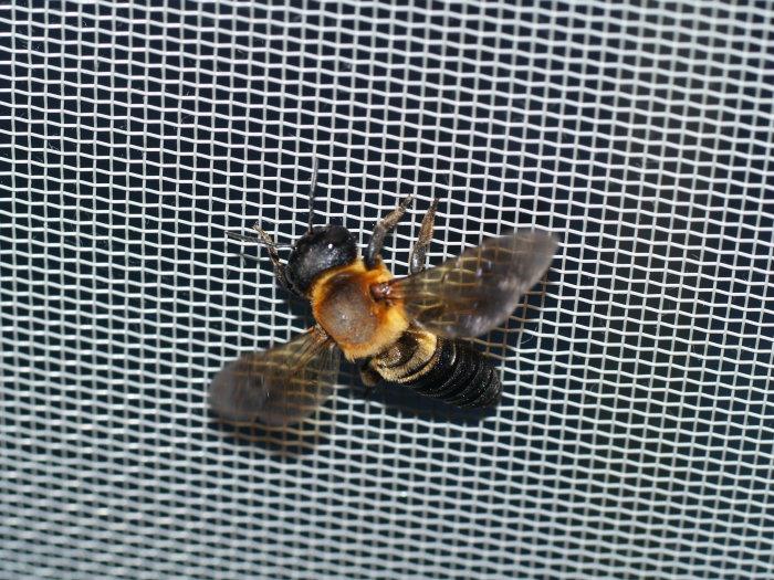 何蜂?_c0116915_2254352.jpg