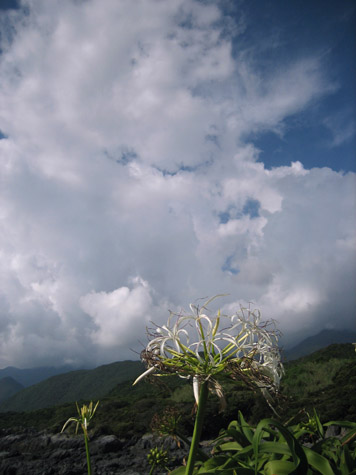 栗生の浜と夏の雲_c0107829_12251986.jpg
