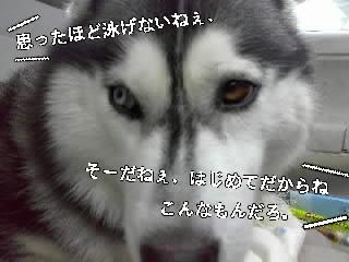d0087675_1318775.jpg