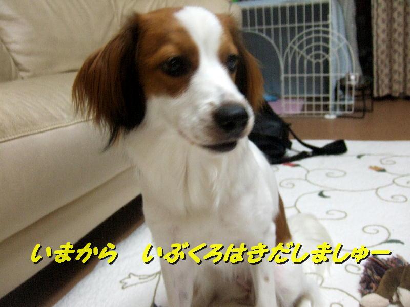 c0075585_13501146.jpg