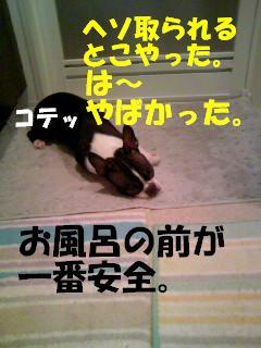 c0092097_917381.jpg