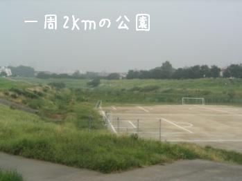 強情杏_f0068501_9243219.jpg