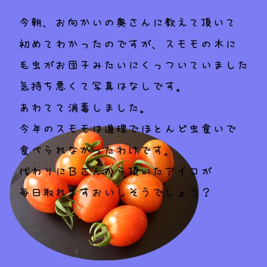 b0019313_212821.jpg