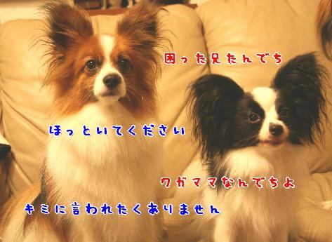 d0013149_0224667.jpg