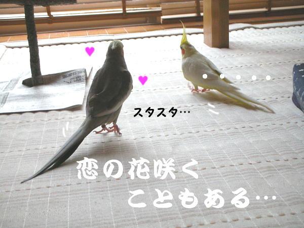 f0132055_1118185.jpg