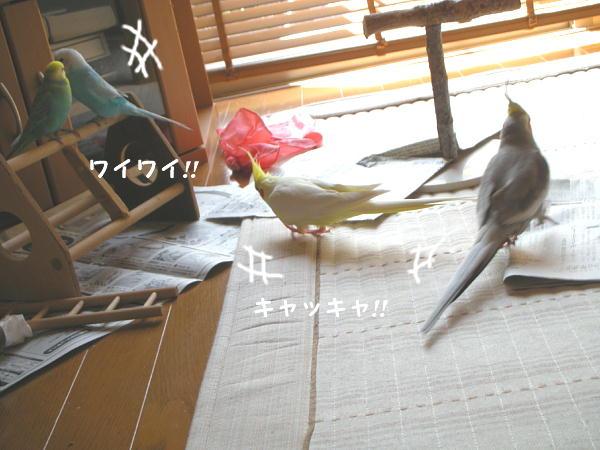 f0132055_11244760.jpg
