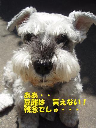 c0098501_2013522.jpg