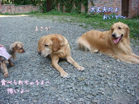 人にはフレンドリーだけど犬は怖い_f0064906_16544293.jpg