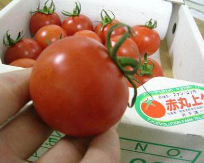 「トマト物語り Q&A-5」_c0126766_13165327.jpg